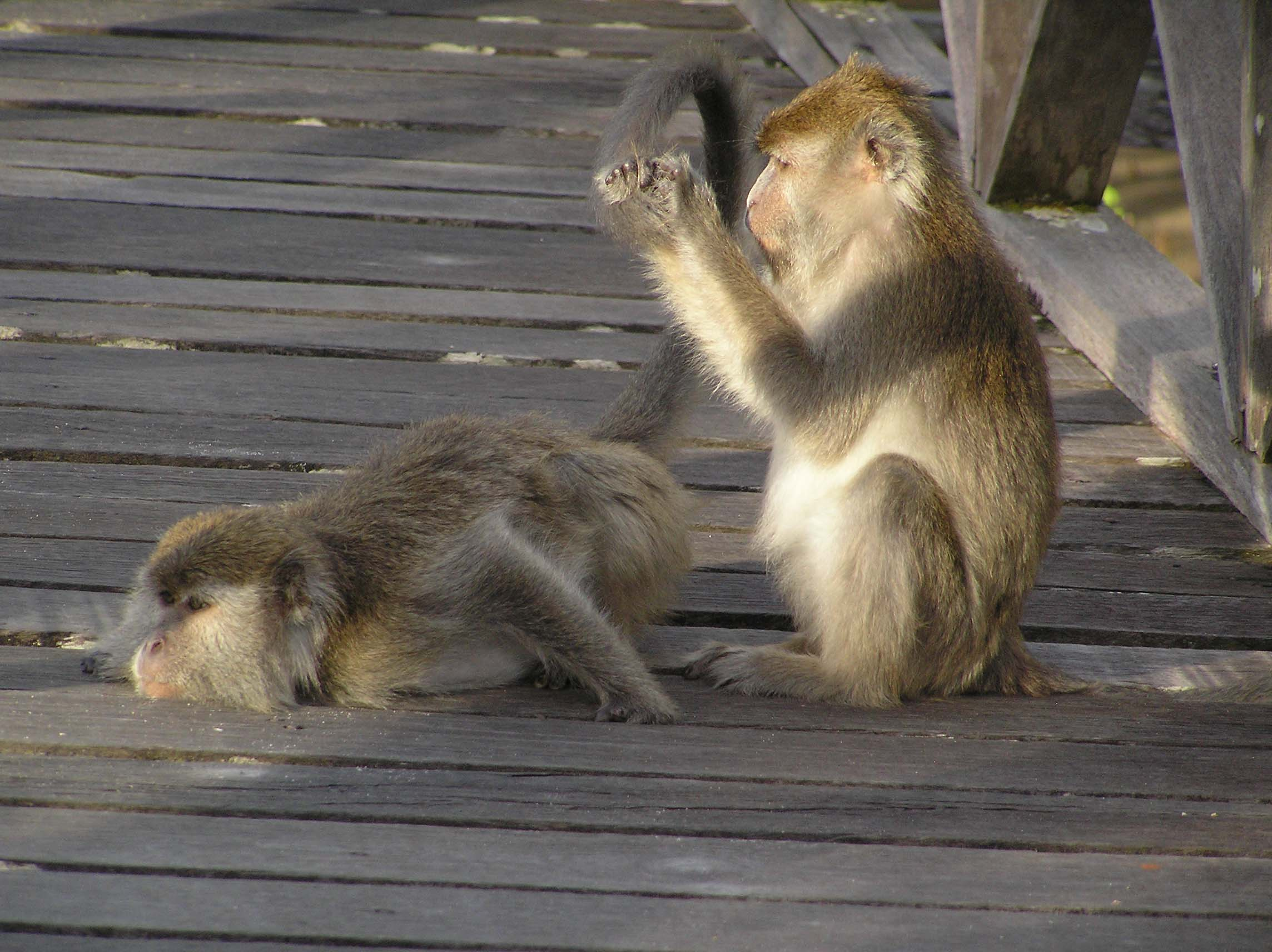 Cheeky Monkey – Bako National Park, Borneo | A Word in ...