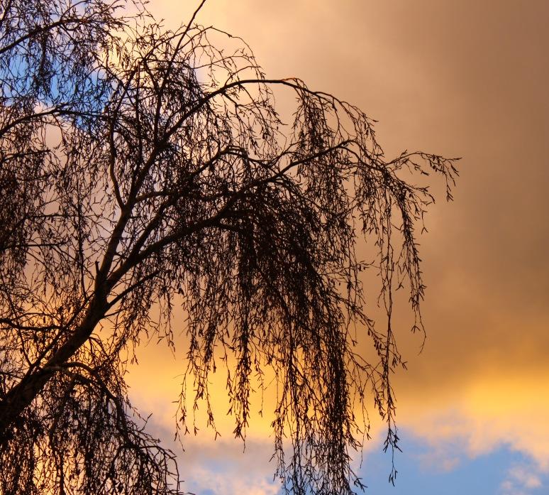 sunsethome